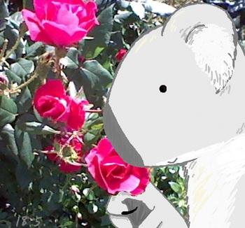 snsコアラとバラ3.jpg