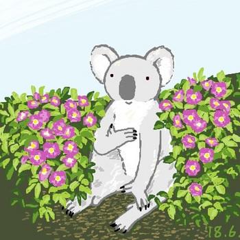 snsコアラと濃いピンクの花.jpg