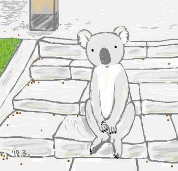 snsコアラと石の階段.jpg