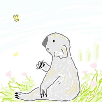 snsコアラと蝶々.jpg